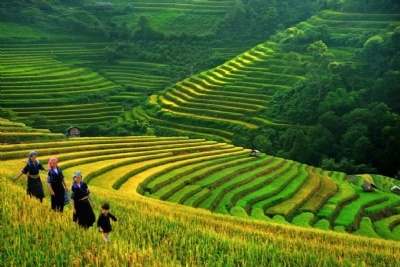 SAPA TREKKING 3 DAYS - 2 NIGHTS  BY DAY BUS